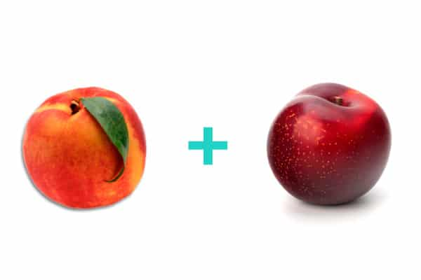 Peach + plum = baby food