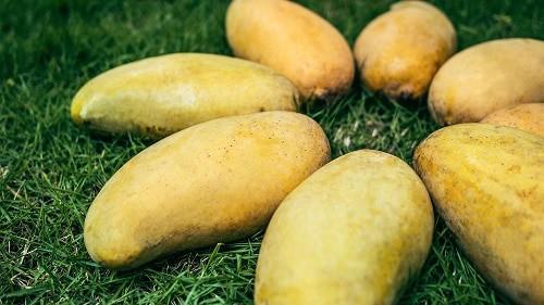 eight yellow banana fruits