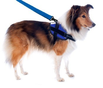 dog on leash similar to child leash