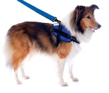 dog on leash similar to child leash
