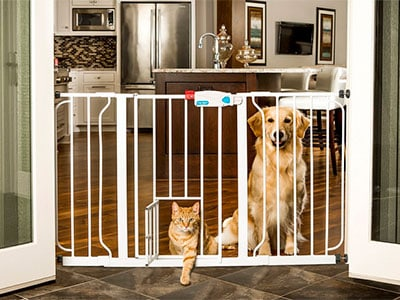 cat walking through baby gate with pet door while dog watches