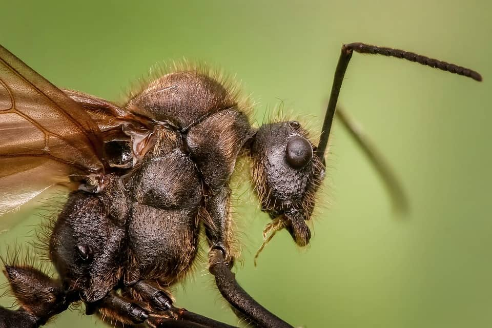 Ant Close Up Look