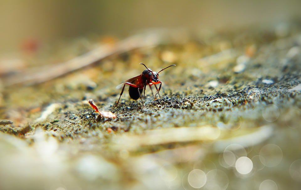 Female ant is walking at the land