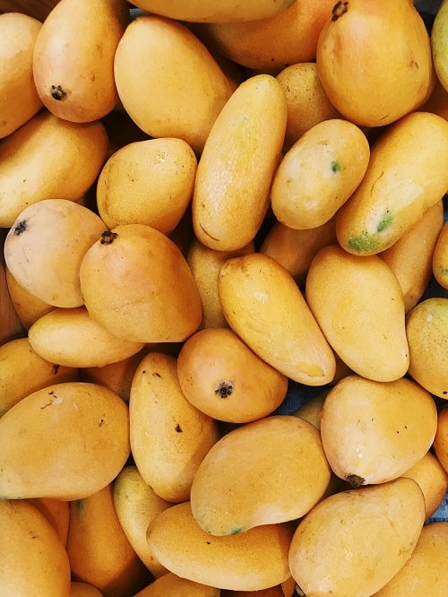 bunch of yellow mango