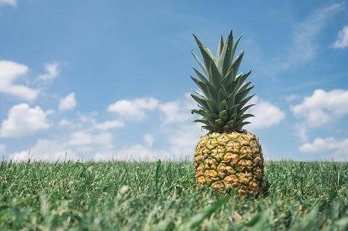 pineapple on grass